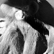 Monkey See Monkey Do Poster