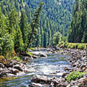 Montana River And Trees Poster