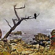 Monterey Mist Poster