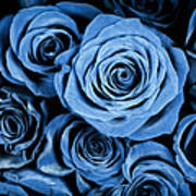 Moody Blue Rose Bouquet Poster