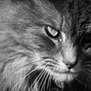 Moody Cat Poster