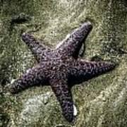 Moody Starfish I Poster