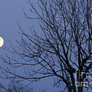 Moon And Bare Tree Poster
