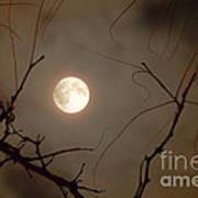 Moon Behind Branches Poster by Deborah Smolinske