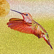 Moon Over Hummingbird Poster