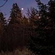 Moonlit Evening Poster
