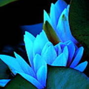Moonlit Waterlilies Poster
