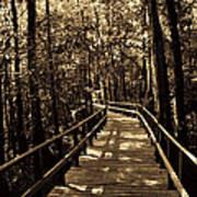 Moores Creek Battlefield Nc Swamp Walk  Poster