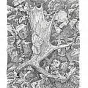 Moose Antler Shed Poster by Kenneth or Susan Posselt