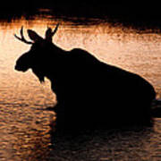 Moose Silhouette 3569   Poster