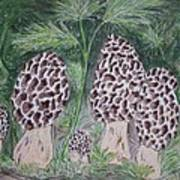 Morel Mushrooms Poster