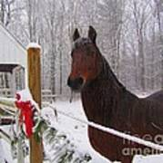 Morgan Horse Christmas Poster by Elizabeth Dow