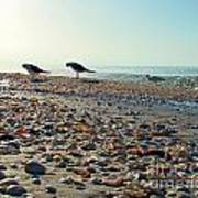 Morning Beach Preen Poster