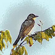 Morning Bird Poster