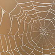 Morning Dew On Web Poster