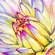 Morning Flower Poster