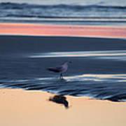 Morning Gull Poster