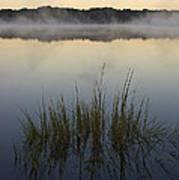 Morning Mist At Sunrise Poster