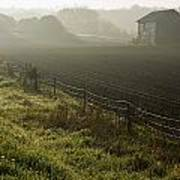 Morning Mist Over Field And Poster by Jim Craigmyle