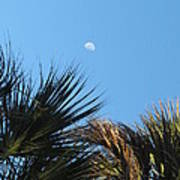 Morning Moon Over Palms Poster