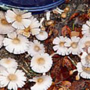 Morning Mushrooms Poster