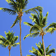 Morning Palms Poster