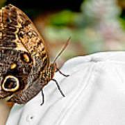Morphos Butterfly On White Baseball Cap Art Prints Poster