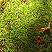 Moss And Leaves Poster