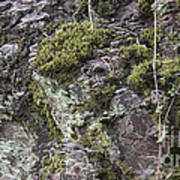 Moss And Lichen Poster