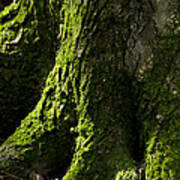 Moss Covered Tree Trunk Poster by Christina Rollo