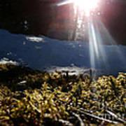 Moss In The Sunlight Poster by Steven Valkenberg