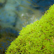 Moss On River Poster
