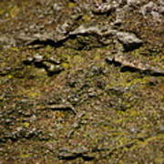 Moss On Rock Poster