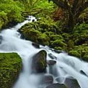 Mossy Creek Cascade Poster