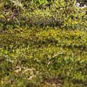 Mossy Green Poster