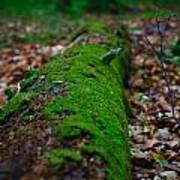 Mossy Log Poster