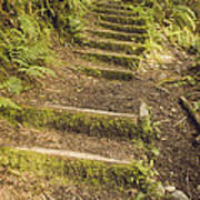 Mossy Path Poster