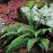 Mossy Rock And Fern Poster