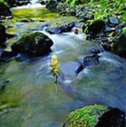 Mossy Rocks And Moving Water  Poster
