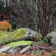 Mossy Rocks Garden Poster