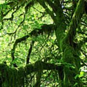 Mossy Tree Poster by Athena Mckinzie