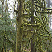 Mossy Trees Poster