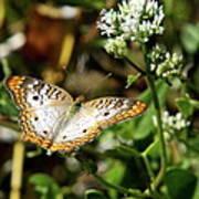 Moth On White Flower Poster