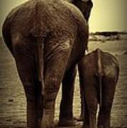 Mother And Baby Elephant In Black And White Poster