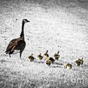 Mother Goose Poster by Elena Elisseeva