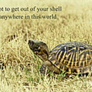 Motivating A Turtle Poster by Robert Frederick