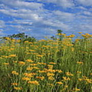 Mount Cheaha Goldenrod-alabama Poster