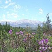 Mount Katahdin And Wild Flowers Poster