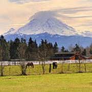 Mount Rainier And Grazing Horses Poster
