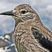 Mountain Bird Poster